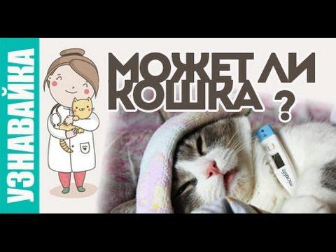 Может ли кошка заразиться, забеременеть? Узнавайка