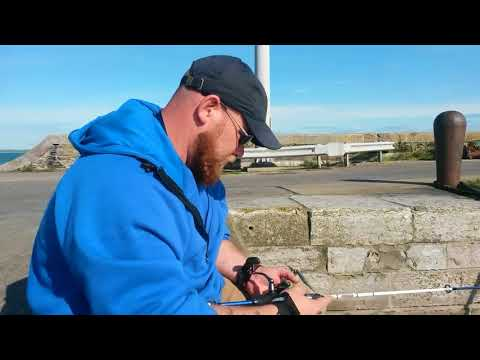 fishing anglesey for species