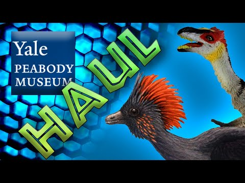 Yale Peabody Museum Of Natural History Gift Shop Haul! || New Dinosaur Souvenirs