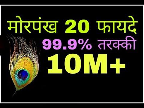 Morpankh рдпрд╣ 20 рдЕрджреНрднреБрдд рдЬрд╛рдирдХрд╛рд░реА рд╢рд╛рдпрдж рд╣реА рдХреЛрдИ рдЖрдкрдХреЛ рдмрддрд╛рдПрдЧрд╛ рдЬрд▓реНрджреА рдЬрд╛рдиреЗ peacock feathers