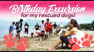 Birthday Excursion for my Rescued Dogs!