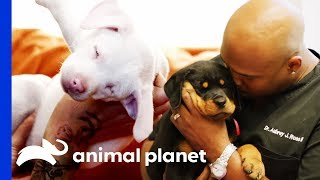 🔴 The Best of Dogs on Animal Planet!