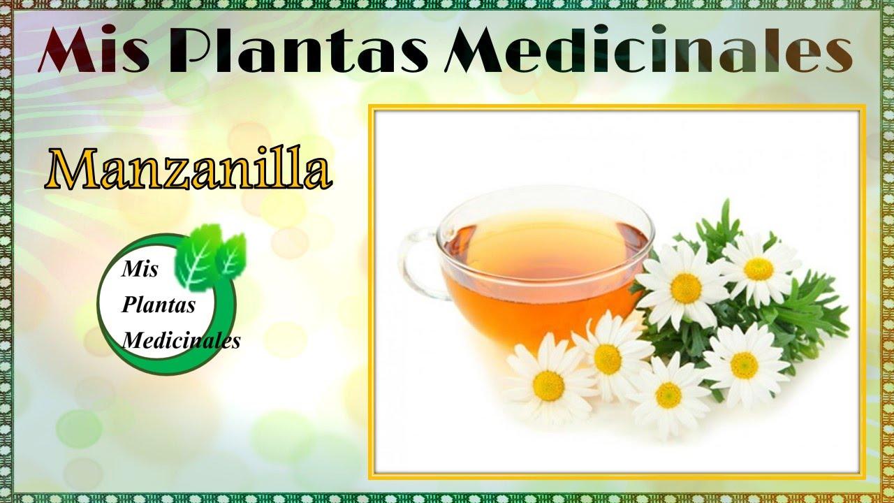 Propiedades y beneficios de la manzanilla para la salud for Planta decorativa con propiedades medicinales