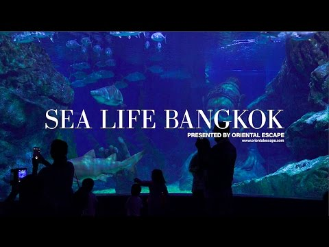 [HD] Sea Life - Ocean World Bangkok, Siam Paragon - Thailand