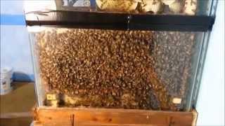 Aquarium Observation Hive - Update 3
