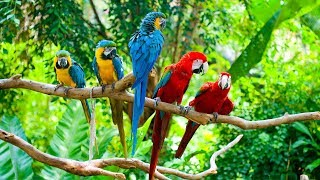Enjoy the peaceful and colorful nature views in beautiful 4k uhd super quality animals video   site of paradise birds subscribe get mor...