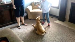 Puppy Training By Daughter Jersey Dakota
