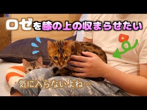猫封じ〜ロゼ編〜