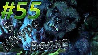 Прохождение игры The Witcher Ведьмак 3 [PC 60 FPS] #55 В Волчьей Шкуре