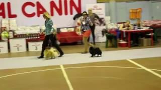 Всепородная выставка собак ранга САС-КЧФ г. Дзержинск, Померанский шпиц, Юниоры, 2 место