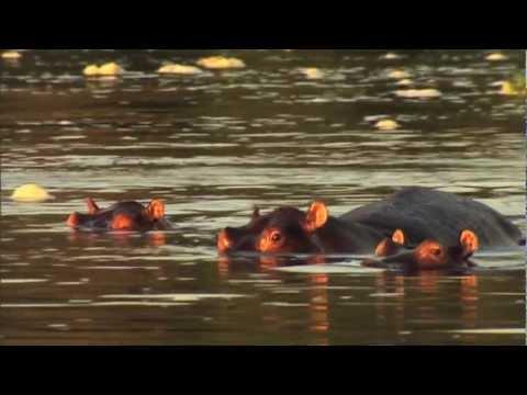 Far Out Fishing - Nile Perch In Uganda (HD Version)