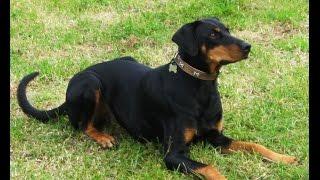 Dog Training For Desired Behaviors