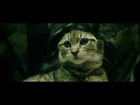 Salute to the matrix Keanu Reeves plays Keanu cat