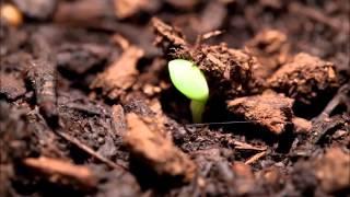 видео Жизнь растений у воды