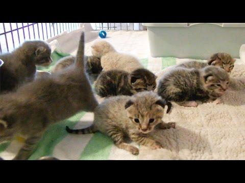 CUTE Baby Kittens!!