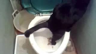 Мой Кот,ходит в туалет