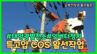 #42 특고압 활선작업(COS 교체)-  태양광발전소