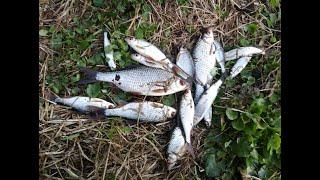 Фидер на малой реке или рыбалка на реке Угре в Калужской области