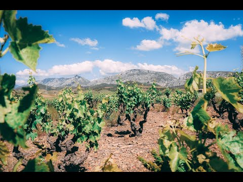 wine article The Terroirs of Roussillon  Masters of Wine Talk about Roussillon Wine Part2