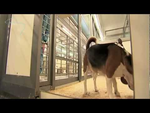 Dogs in medical research