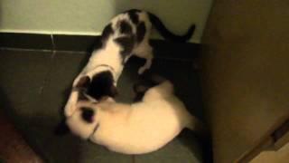 Como gatos se comportam após a castração?