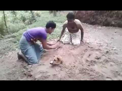 Chittagong most funny video.Don't miss this video