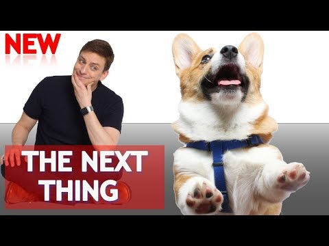 The Next Things To Teach Your Dog 🐶 ! (How to go from BEGINNER to INTERMEDIATE)
