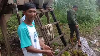 Panen durian langsung di kebunnya