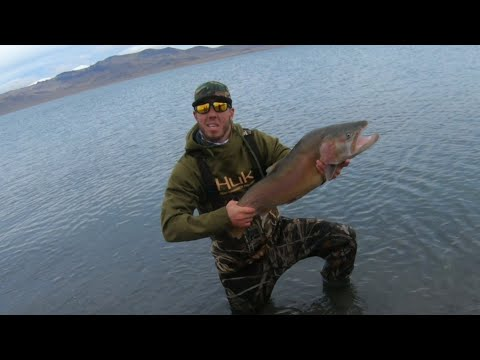 Monster Lahontan Cutthroat Trout At Pyramid Lake