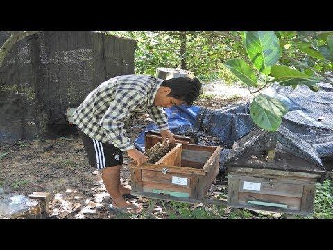 how to split beehives - Easy to get more bee colonies | Splitting | Beekeeping technique