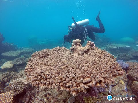 Catastrophic bleaching in northern Great Barrier Reef