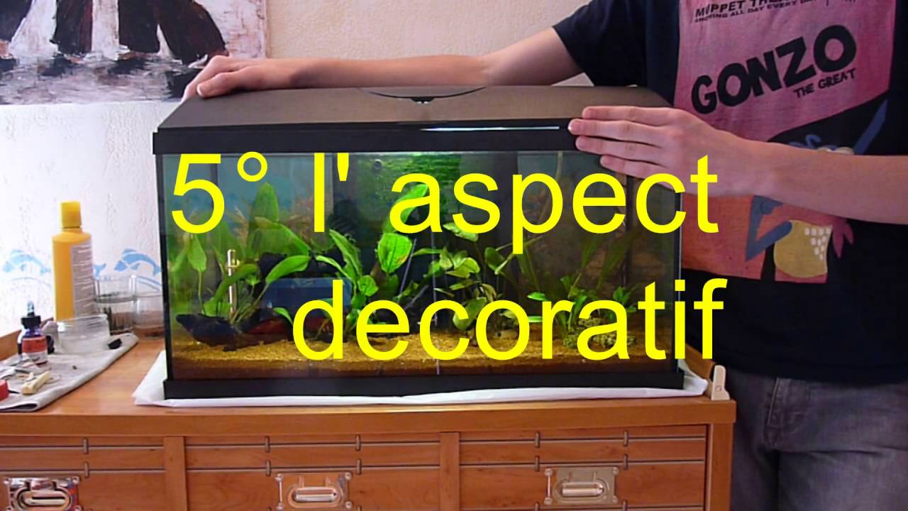 Avoir Un Aquarium hors série #2 : 5 bonnes raisons d' avoir un aquarium chez soi - youtube