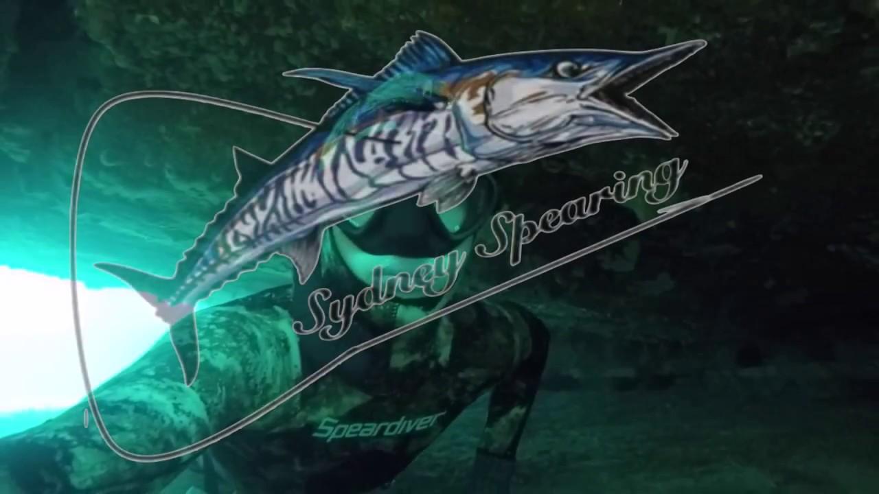 Spearfishing Sydney NSW vol 5