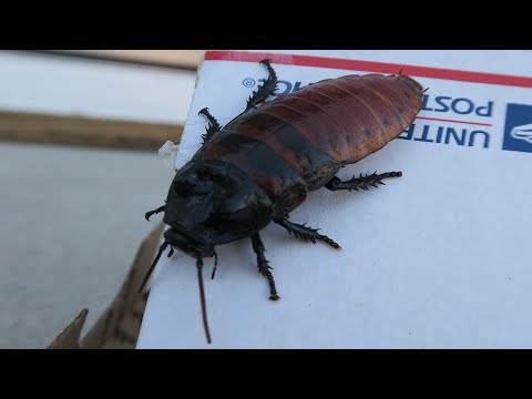 I GOT PRANKED! BIGGEST COCKROACH EVER SENT TO MY MAIL BOX! - (Pranks)