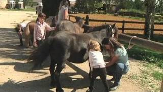 Le cheval dès le bas âge (St-Hilaire-sous-Romilly)