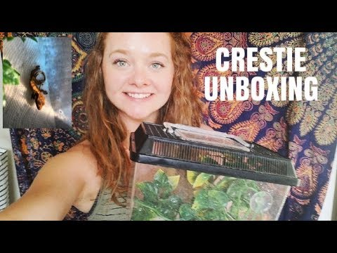 Shipping A Crested Gecko & Unboxing!!!