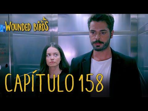 Wounded Birds (Yaralı Kuşlar)   Capítulo 158 En Español