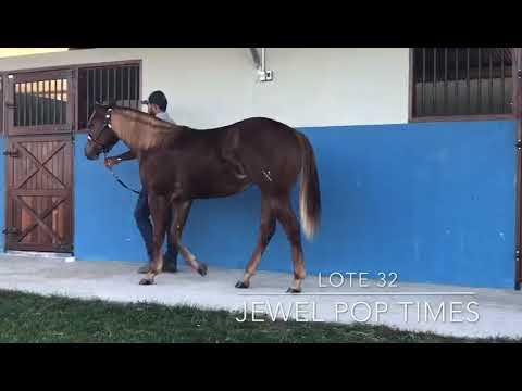 LOTE 32 - JEWEL POP TIMES - 1° LEILÃO SELO DE RAÇA