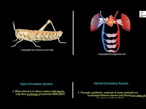 Difference Between Open And Closed Circulatory System, Biology Lecture | Sabaq.pk |