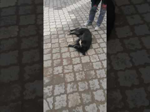 Yaralı köpeğe Şerefsizce Yapılan İyilik