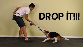 Teach Dog To Drop It / Give By Playing Tug Of War