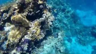 Египет. Отдых в Шарм-эль-шейх. Красное море. Дайвинг. GoPro.Island View Resort 5*.(Музыка [Life is Strange OST]Alt-J - Something Good Видео снято на камеру SJ 4000., 2015-07-20T18:52:52.000Z)