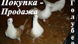 Продажа голубей. Группа в одноклассники - http://ok.ru/prodazha.golubey