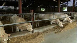 Les Etablières: Une ferme expérimentale pour l'élevage futur