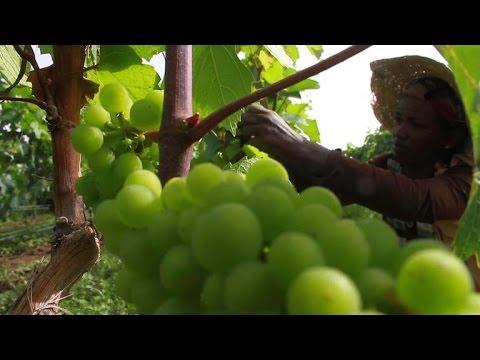 Ethiopian wine raises cheer for economy