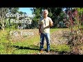 - Companion Planting for Fig Trees