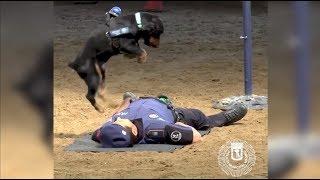 Пёс Пончо делает напарнику сердечно-лёгочную реанимацию
