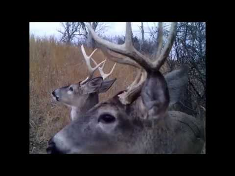 2017/03/31 - Arnold Game Camera VIDEO (311.1 Acres in Coffey Co)