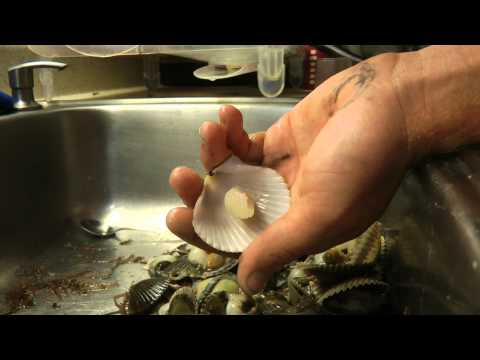 Quick way to clean scallops