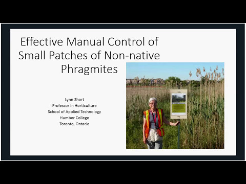 Manual control of non-native Phragmites - effective options for small patches